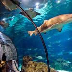 <b>Самый большой океанариум в Москве</b>