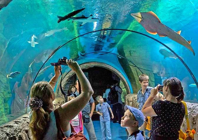 океанариум на острове русском график работы и стоимость билетов