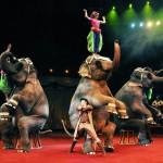 <b>Старейший и самый большой. Цирки в Москве</b>