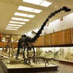 <b>Палеонтологический музей имени Ю.А. Орлова РАН. Динозавры тут тоже есть.</b>